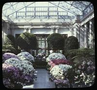 Azaleas at the conservatory at Longwood, estate of Mr. and Mrs. Pierre S. du Pont