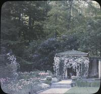 Tulips, violas, white clematis, and other flowers with pergola in gardens at Winterthur, estate of Henry Francis du Pont