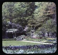 Violas, tulips and wisteria in the gardens at Winterthur, estate of Henry Francis du Pont