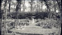 Birdbath and hedge in gardens of Alice Lea Spruance at The Patch
