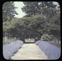 Border planting of nepata at St. Amour, home of Mary Belin du Pont