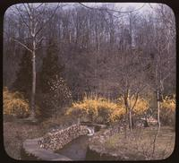 Forsythia along stone-lined stream with footbridge at the Old Mill, weekend home of T. Coleman and Alice du Pont