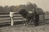 Lawrence Fisher with two unidentified men and bull at the home of Fred Fisher