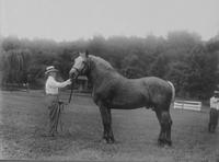 Draft Horse, Montpelier Horse Show, ca. 1920