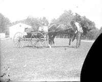 Norman Mancill, Sr., with horse and buggy