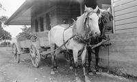 Wagon pulled by two horses
