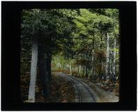 Mauch Chunk Switchback Railroad through the trees