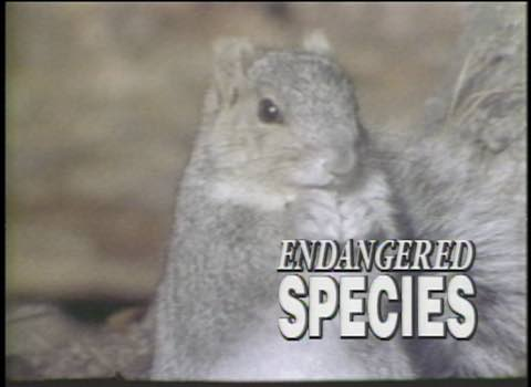 It's Your Business: Endangered Species #646