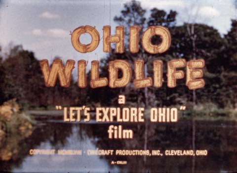 Let's Explore Ohio: Ohio Wildlife