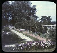 Sweet William beds with pergola in garden of Mrs. Leroy Harvey at Osborne Hill