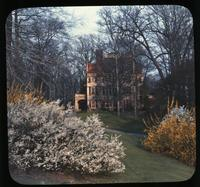 Spirea and forsythia on lawn at Winterthur, estate of Henry Francis du Pont