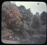 Autumn foliage at The Patch, home of Mr. and Mrs. W.C. Spruance