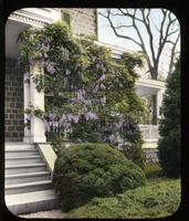Wisteria and boxwood at side veranda at Gibraltar, estate of H. Rodney Sharp