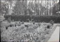Hedges in the gardens of Alice Lea Spruance and house at The Patch