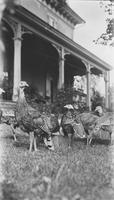 Turkeys in front of the west porch at Locust Knoll Farm