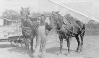 Sam Johnson with two field horses at Wawa Dairy Farms