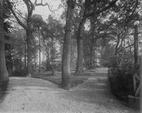 Road on the grounds of Nemours