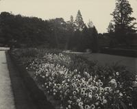 Flowers in bloom along garden walk at Longwood Gardens