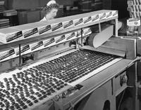Polyester film conveyor belt at Goldenberg Candy Company