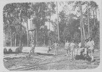 Workers with hickory logs at Hoopes, Bro. & Darlington sawmill (Brooksville, Fla.)