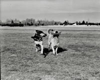 Ground view of two dogs at Pitman Airport in Pitman, New Jersey