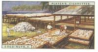 Player's Cigarettes, Coco-Nuts, 4