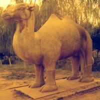 Statue of camel