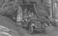Huston family driving through the California Redwood Forest