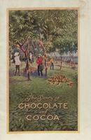 Story of Chocolate and Cocoa