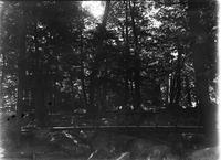 Unidentified man on footbridge in the woods